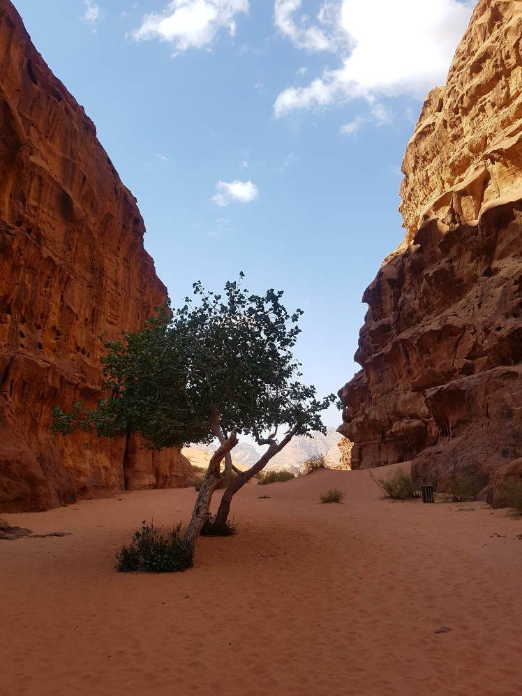 180519_262 Israel & Jordanien